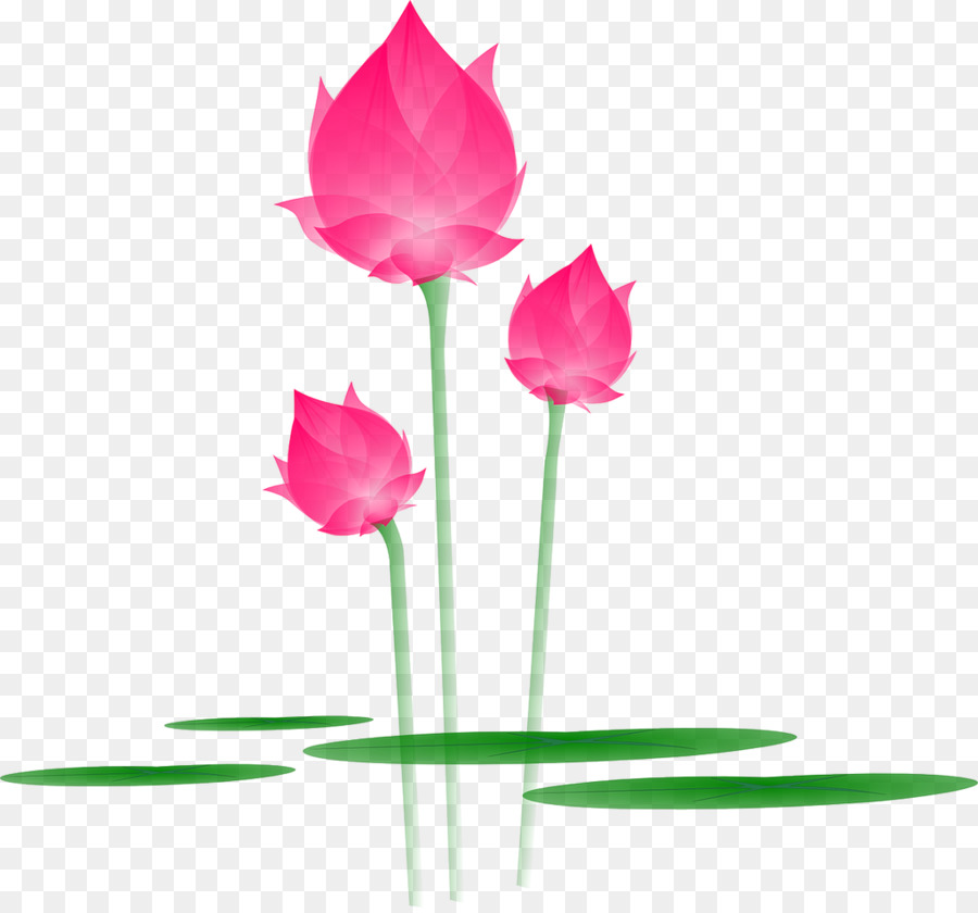 Lily Flower Cartoon Png Download 1024 950 Free Transparent Nelumbo Nucifera Png Download Cleanpng Kisspng
