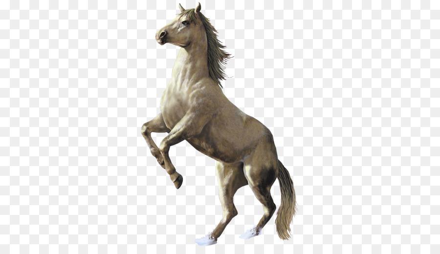 fohlen stute ausmalbilder pferde  malbild