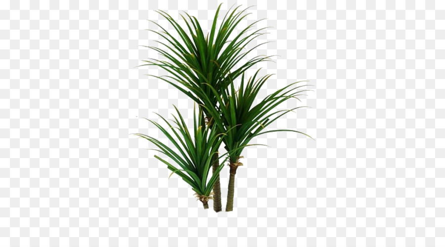 Cartoon Palm Tree png download - 500*500 - Free Transparent ... on palm christmas, palm rats, palm vector, palm chamaedorea seifrizii, palm shoot, palm bamboo, palm leaf chickee, palm roses, palm drawing, palm flowers, palm seeds, palm beetle, palm shrubs, palm bonsai, palm trees, palm leaf cut out, palm tr, palm diagram, palm pattern, palm border,