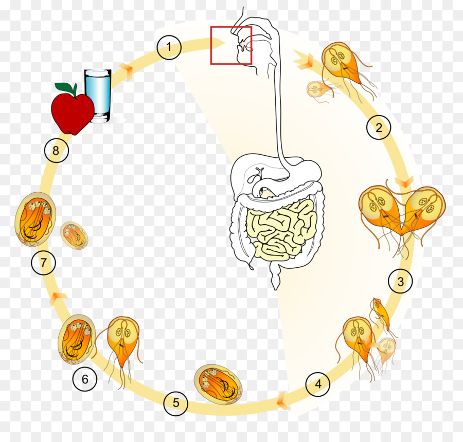 helix giardiasis)