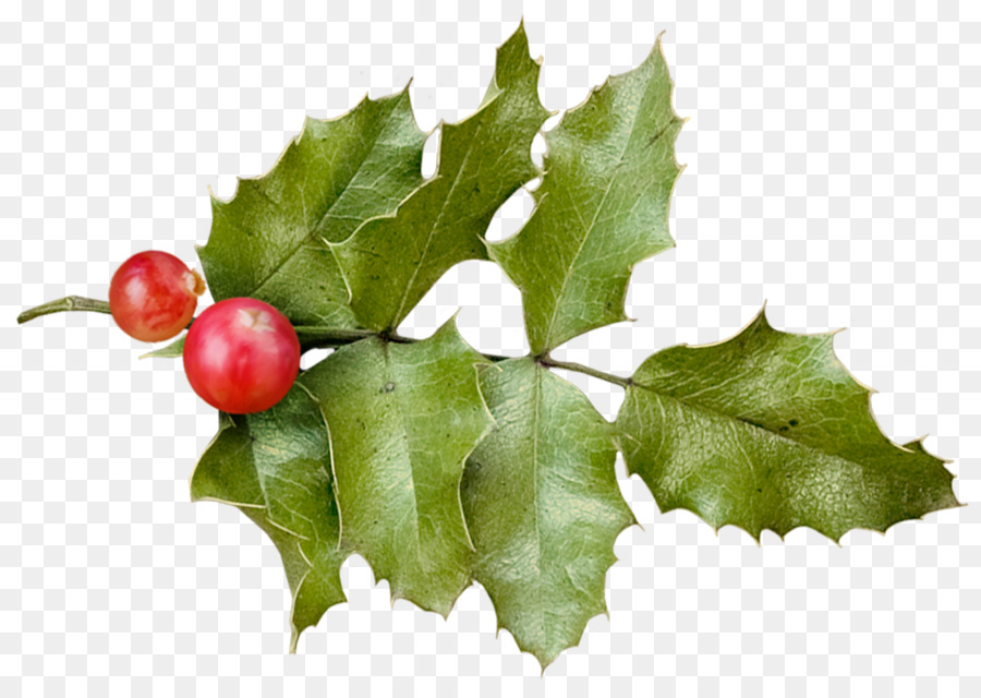 Christmas Holly Png.Christmas Tree Branch Png Download 1822 1289 Free