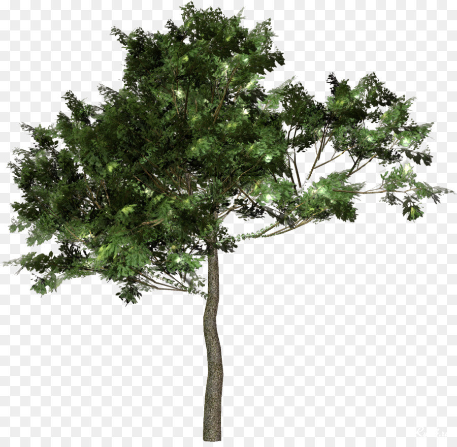 Forest Cartoon Png Download 1063 1028 Free Transparent Tree Png Download Cleanpng Kisspng Cartoon forest landscape by gabiwolf | graphicriver. forest cartoon png download 1063 1028