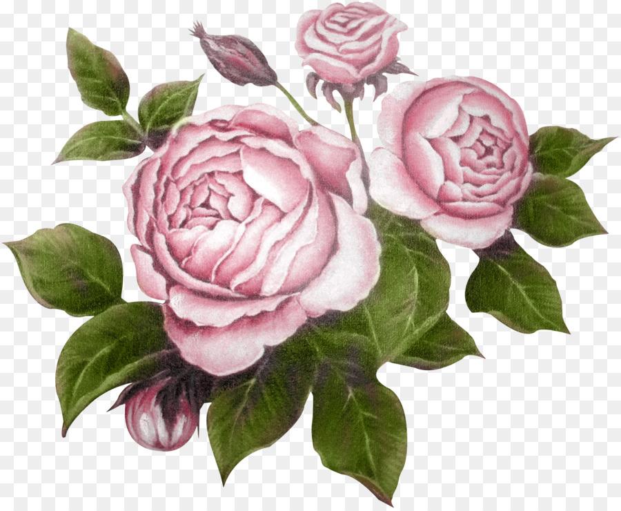 Garten Rosen Blume Raster Grafik Editor Clip Art Pfingstrose