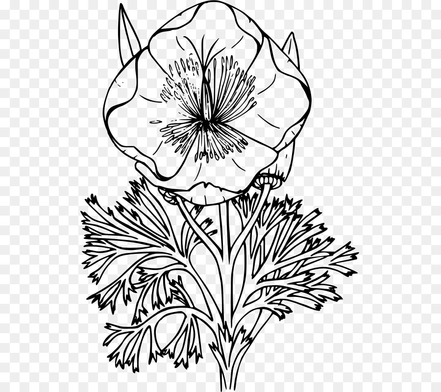 Black And White Flower Png Download 572 800 Free Transparent