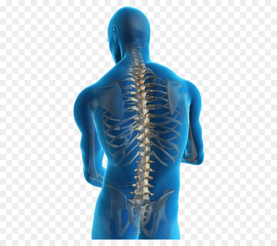 Back Pain Shoulder Png Download 600 800 Free Transparent Back Pain Png Download Cleanpng Kisspng