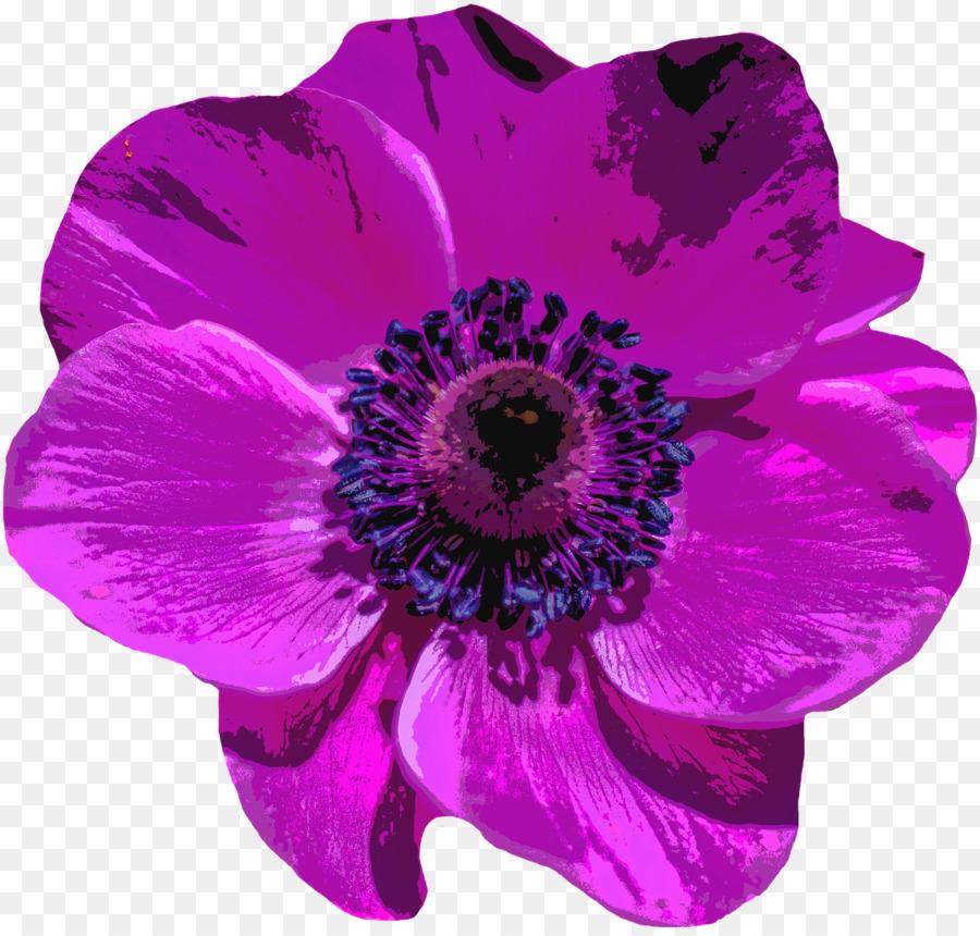 Poppy Flower Png Download 1280 1218 Free Transparent Violet Png Download Cleanpng Kisspng