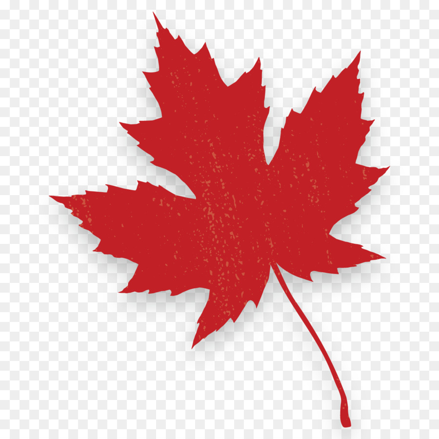 Canada Maple Leaf Png Download 1250 1250 Free