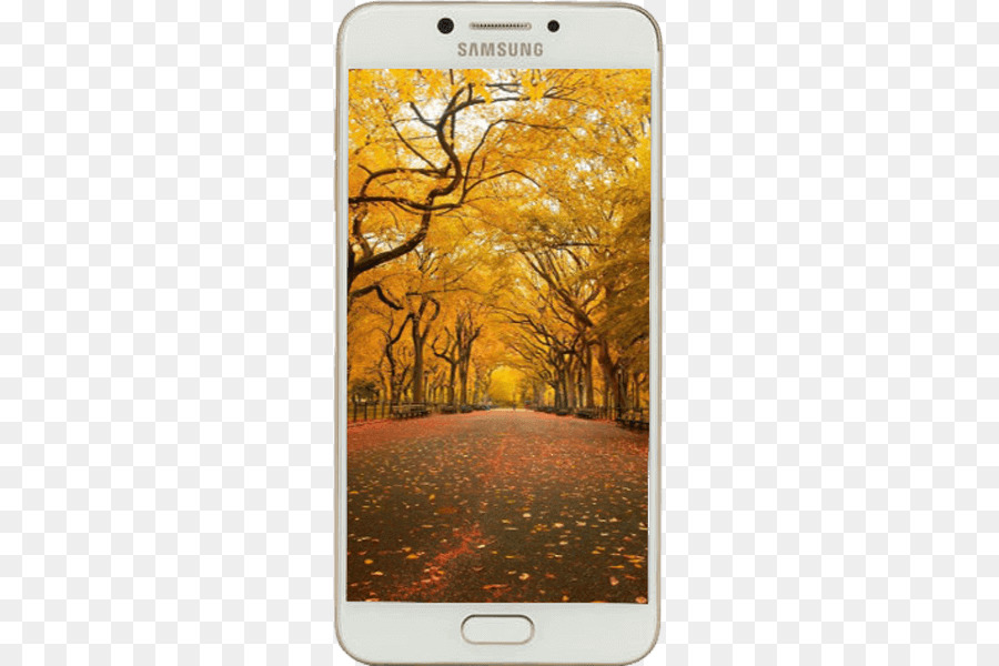 Autumn Background Png Download 533 600 Free Transparent