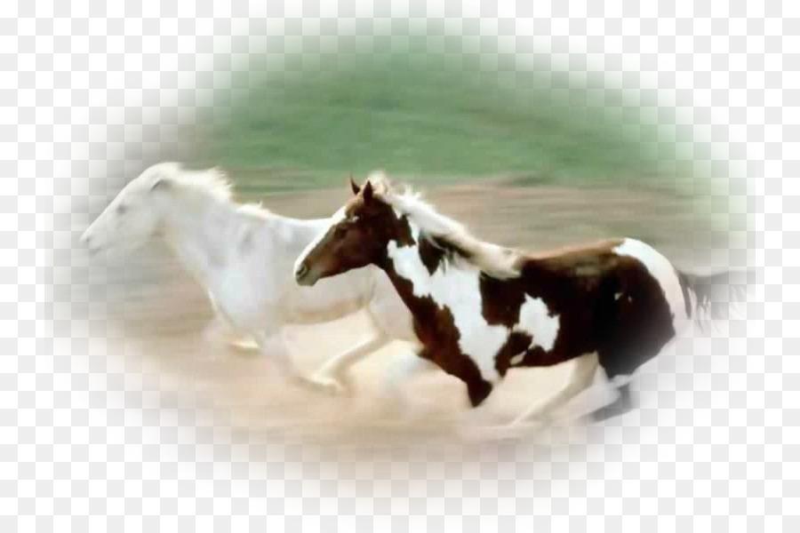 Andalusischen Pferde Mustang Friesen Desktop Wallpaper