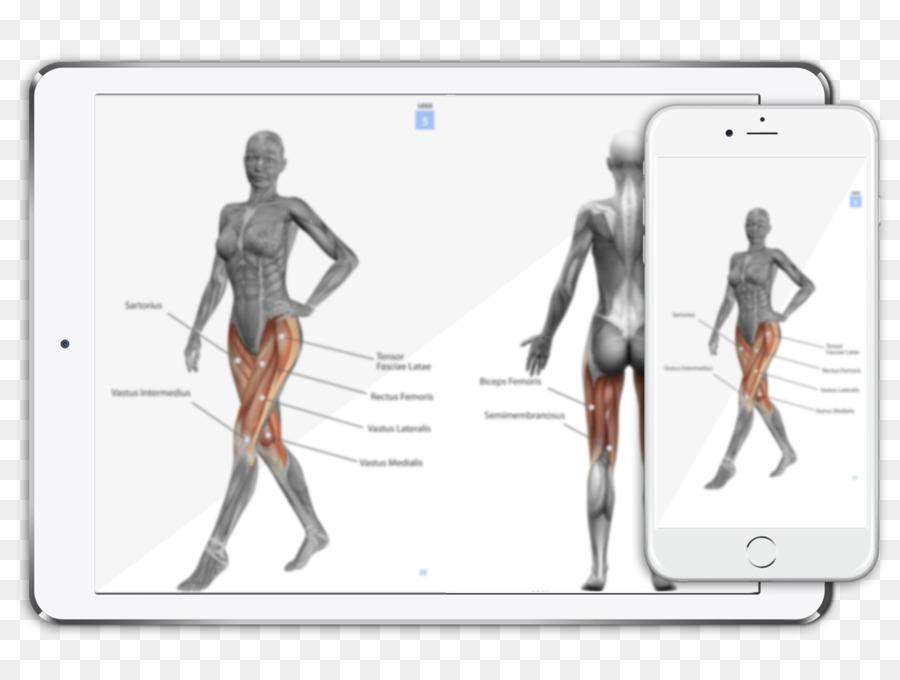 Frau anatomie körper Menschlicher Körper