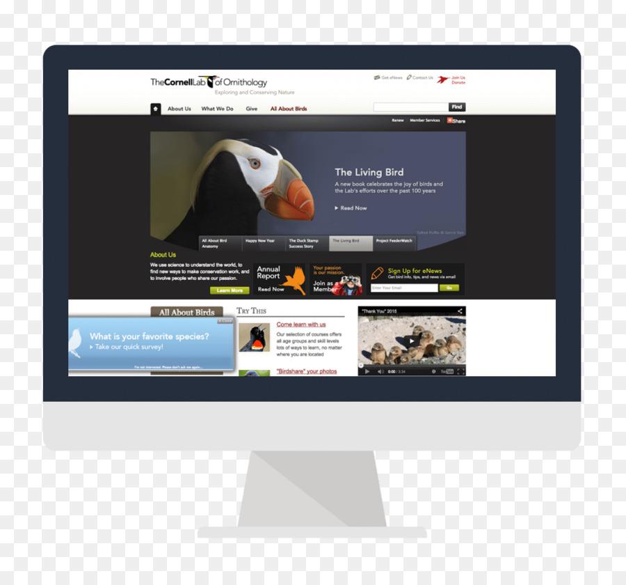 Web Design Png Download 989 907 Free Transparent Web Design Png Download Cleanpng Kisspng