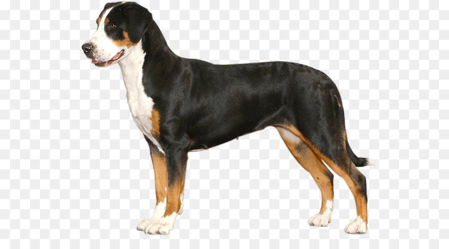 Hund Rasse Mehr Schweizer Sennenhund Entlebucher Sennenhund