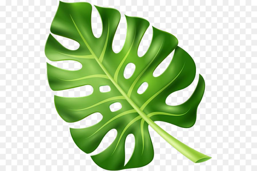 Green Leaf Background Png Download 589 600 Free Transparent Leaf Png Download Cleanpng Kisspng To get more templates about posters,flyers,brochures,card,mockup,logo,video,sound,ppt,word,please visit pikbest.com. green leaf background png download