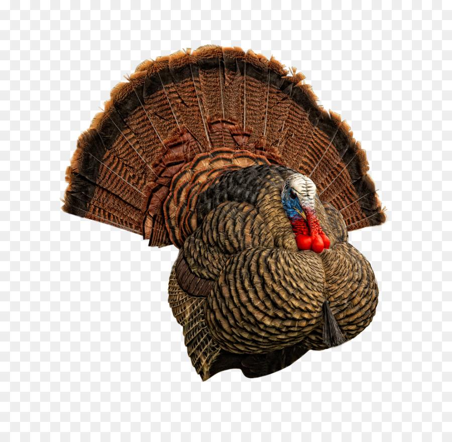 Strut Turkey Stock Illustrations – 52 Strut Turkey Stock Illustrations,  Vectors & Clipart - Dreamstime