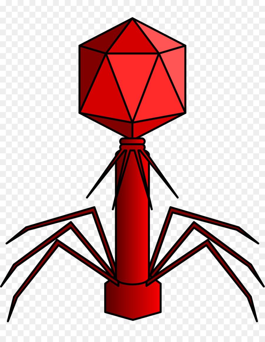Virus Myoviridae Podoviridae Siphoviridae Batteriofago