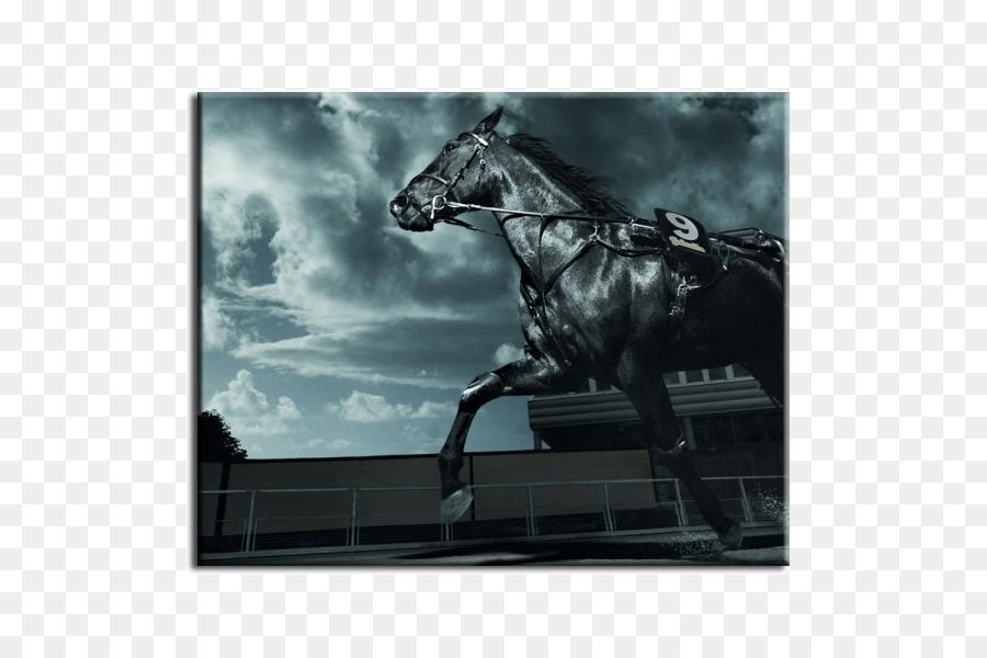 Friesen Desktop Wallpaper Arabian Pferd Schwarz Reitsport