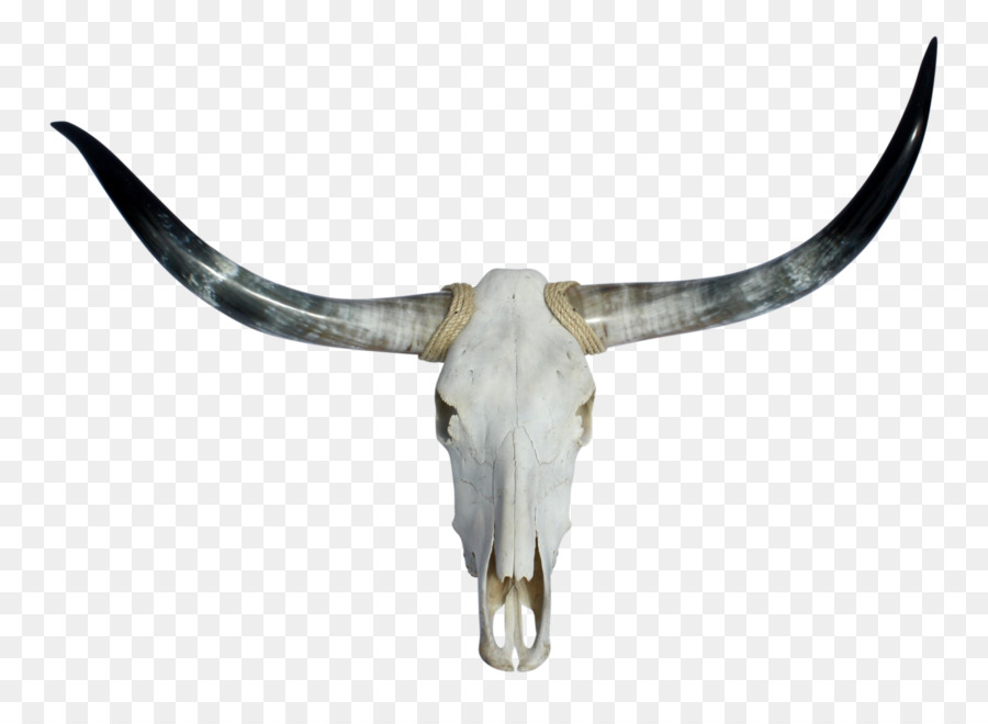 Skull Clipart Png Download 3766 2702 Free Transparent Texas Longhorn Png Download Cleanpng Kisspng