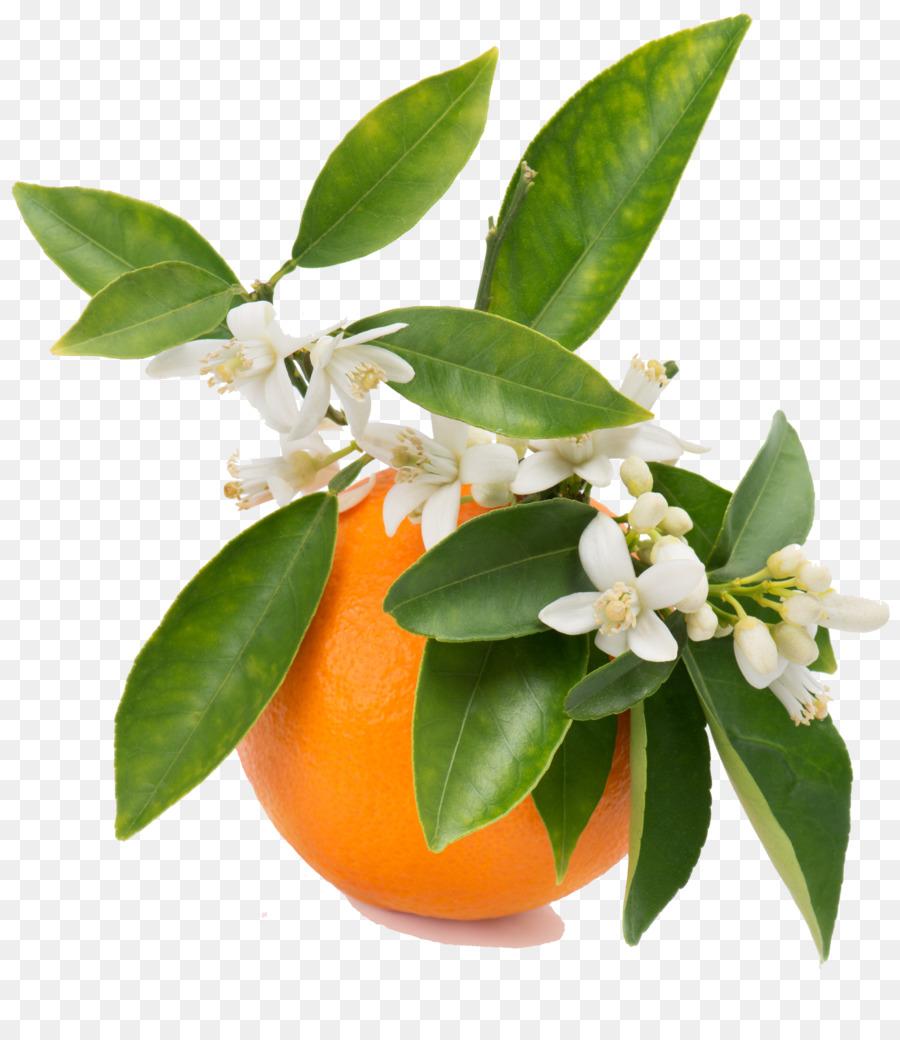 Фото картина цветок ирис