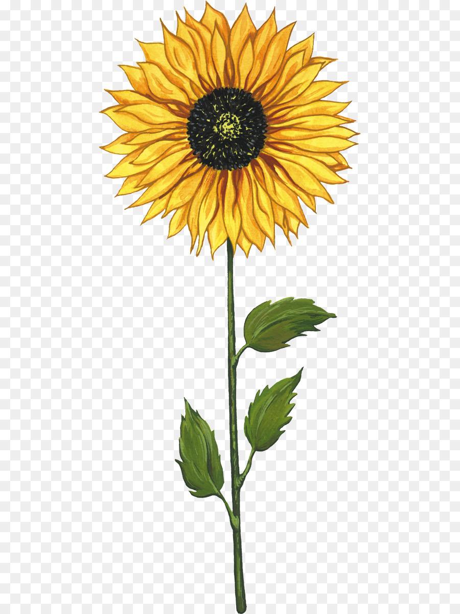 Flower Plant png download - 513*1200 - Free Transparent ...
