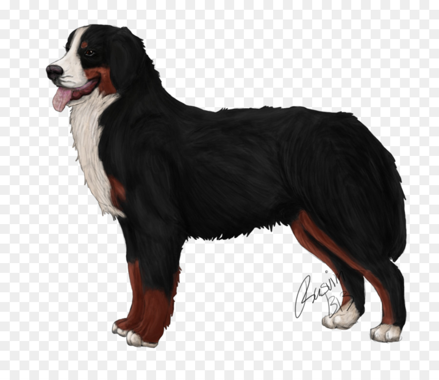 Hunderasse Berner Sennenhund Greater Swiss Mountain Dog