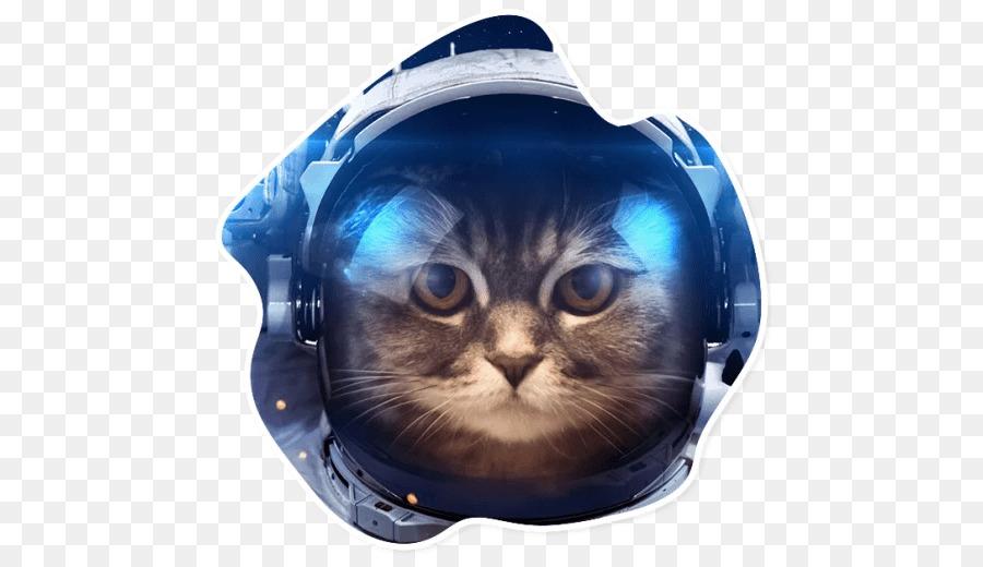 Cat Drawing Png Download 512 512 Free Transparent Cat Png Download Cleanpng Kisspng