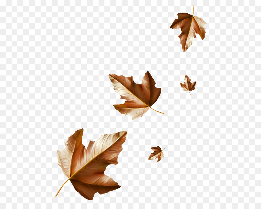 Rain Cartoon Png Download 550 703 Free Transparent Leaf Png Download Cleanpng Kisspng