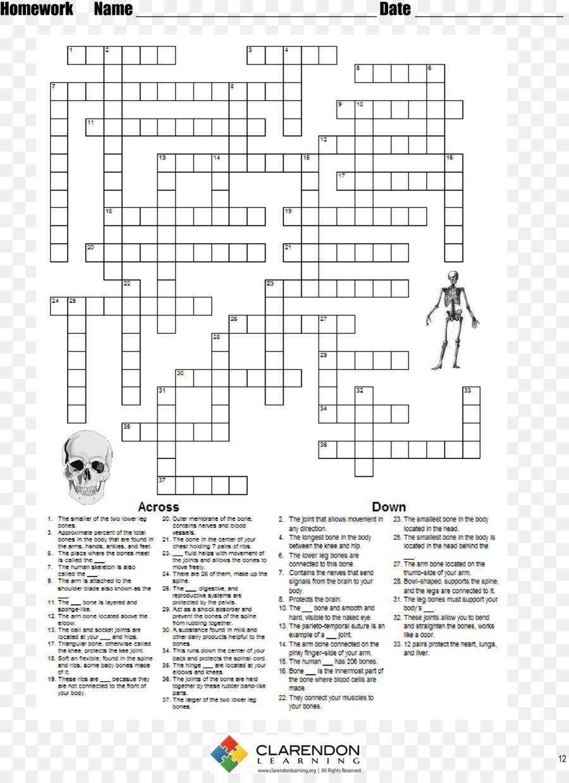 Menschliches Skelett Lektion Homo sapiens Arbeitsblatt   Skelett ...
