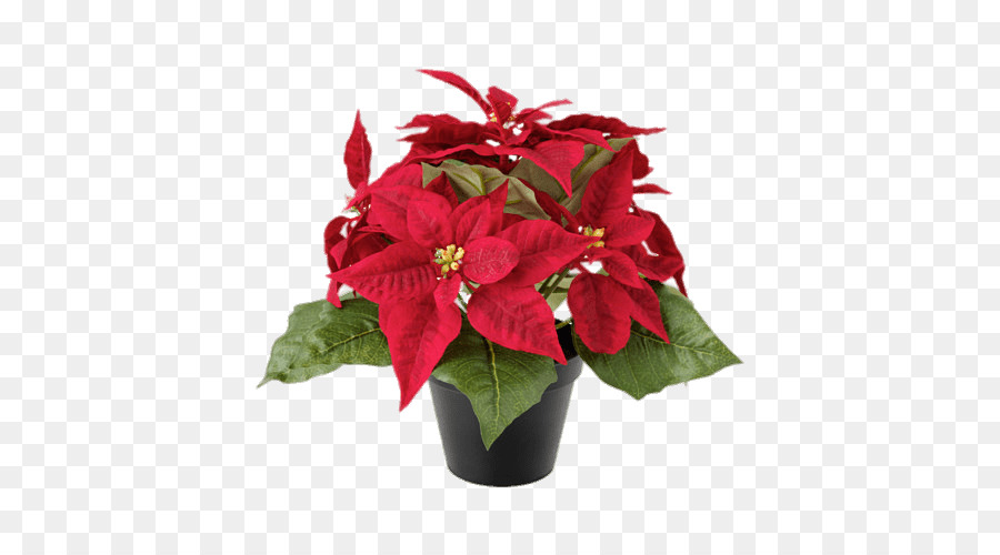 Christmas Poinsettia Clipart Png Download 500 500 Free Transparent Poinsettia Png Download Cleanpng Kisspng