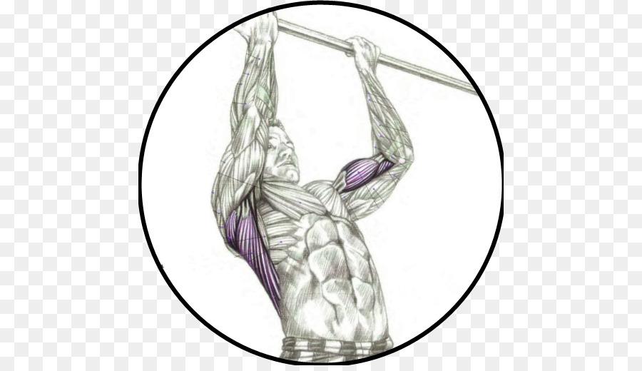 картинки какие мышцы качаются на турнике чтоб