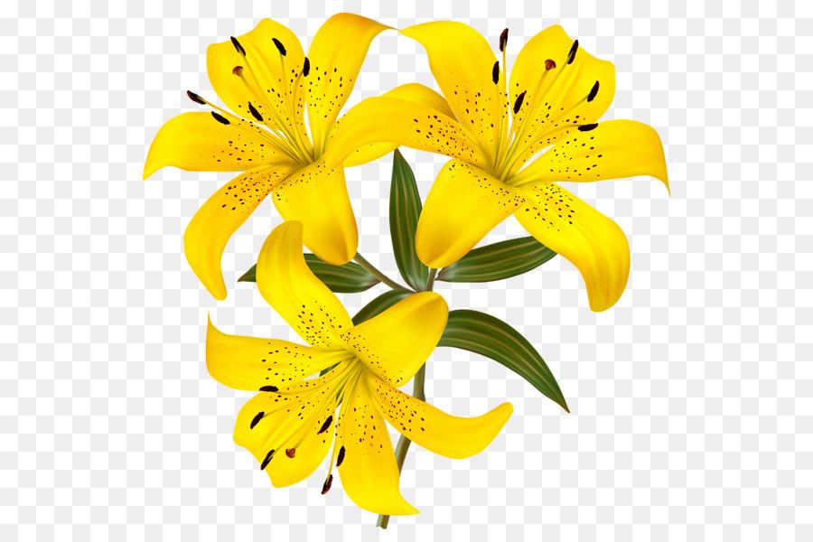 tiger lilie blume