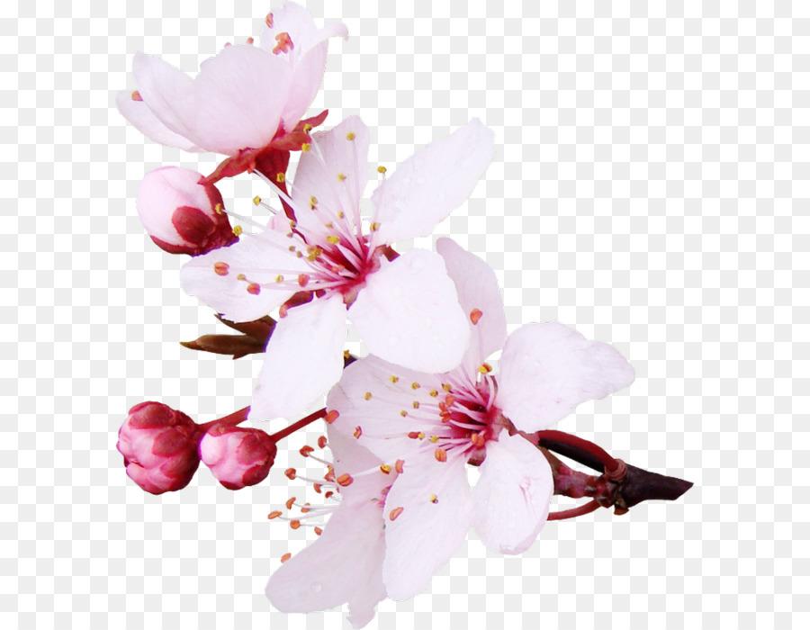Schnittblumen Farbe Papier Kleidung Blume Png