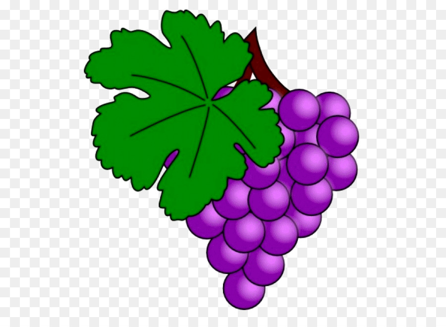 Green Leaf Background Png Download 600 645 Free Transparent Common Grape Vine Png Download Cleanpng Kisspng
