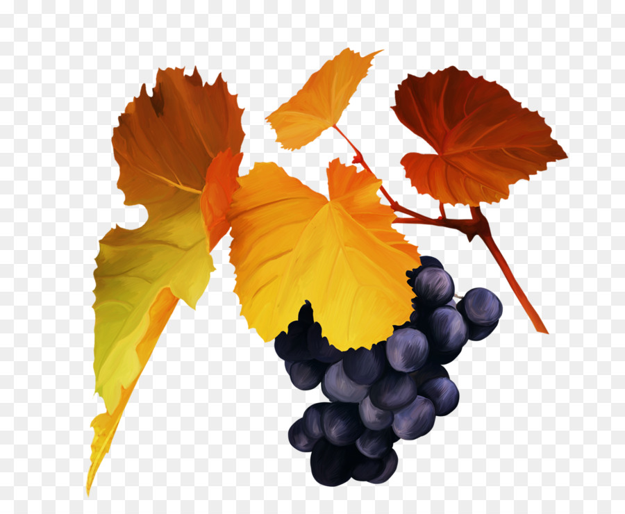 Autumn Leaves Background Png Download 800 740 Free Transparent Grape Png Download Cleanpng Kisspng