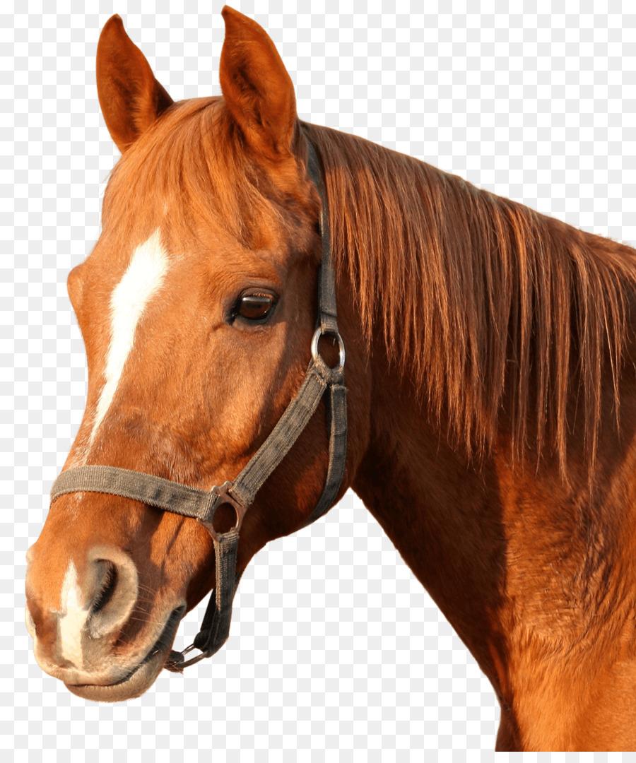 Cavallo Libro Da Colorare Di Animali Adulti Cavallo Scaricare Png Disegno Png Trasparente Cavallo Png Scaricare