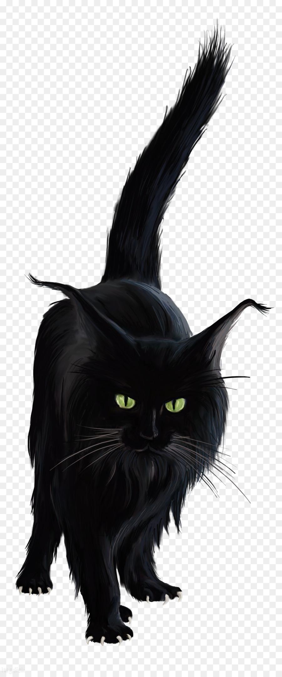 transparent black cat - HD800×1668