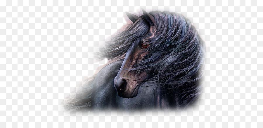 Desktop Wallpaper Herunterladen Arabian Horse Computer