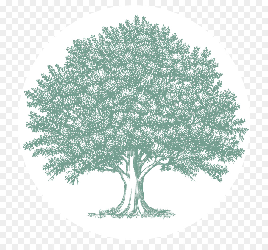 Art Oak Tree Drawing