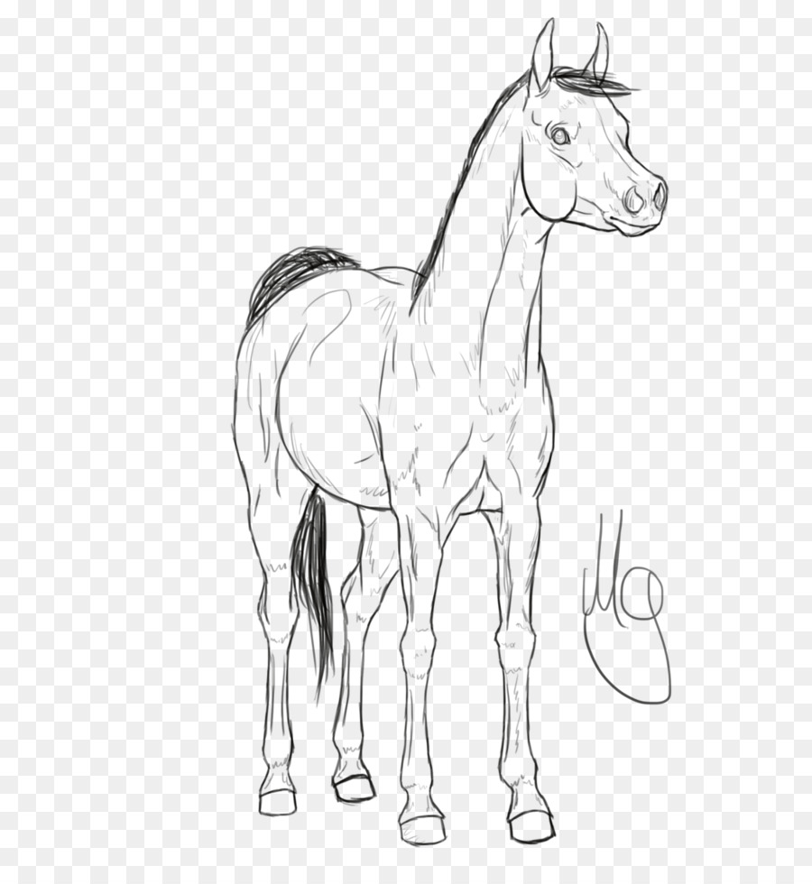 Horse Cartoon Png 816 979 Free Transparent Mule