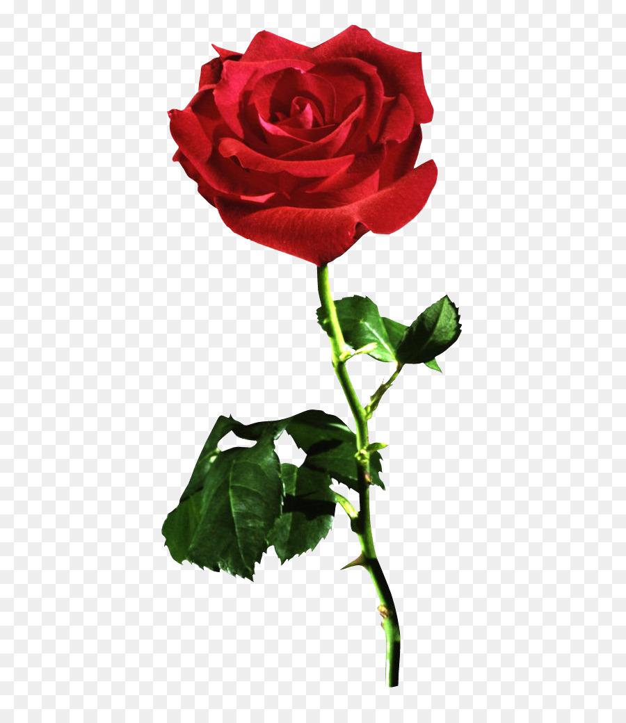 Floral Flower Background Png Download 514 1024 Free