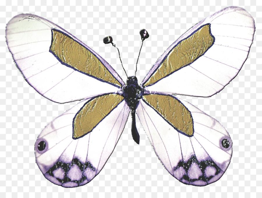 malvorlagen insekten kostenlos