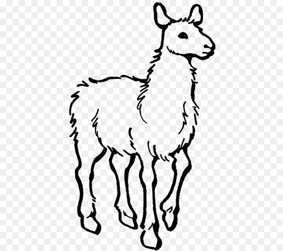 Lama coloring pages - Hellokids.com | 800x900