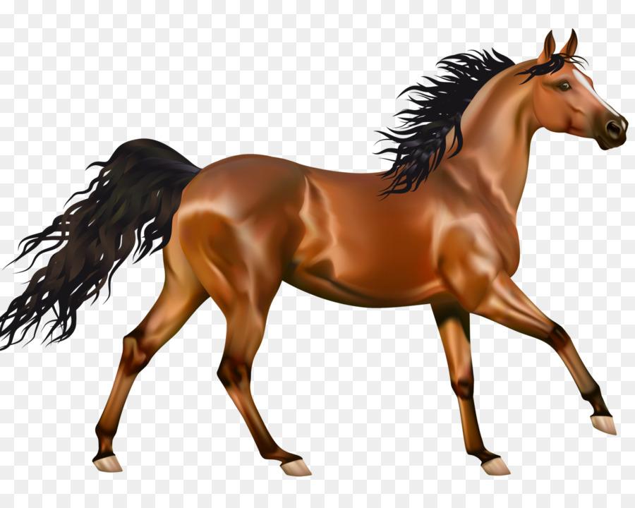 Arabian Horse Pony Clip Art Portable Network Graphics