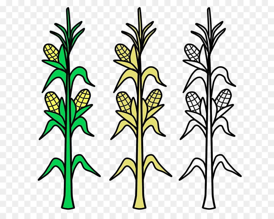corn stalks coloring pages - Clip Art Library | 720x900