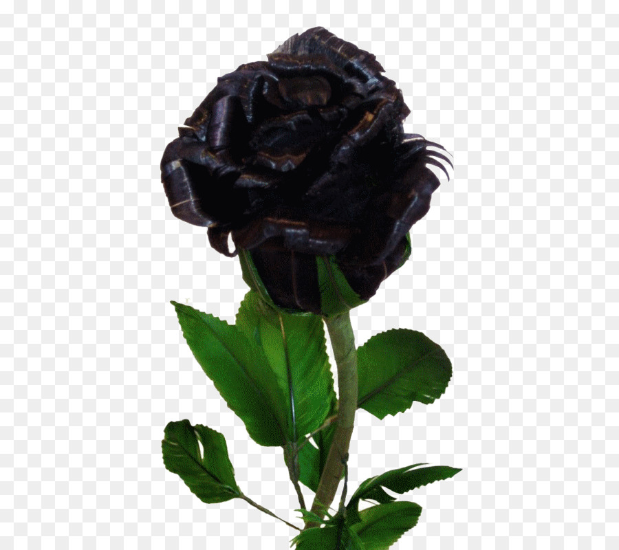 Black And White Flower Png Download 538 800 Free Transparent