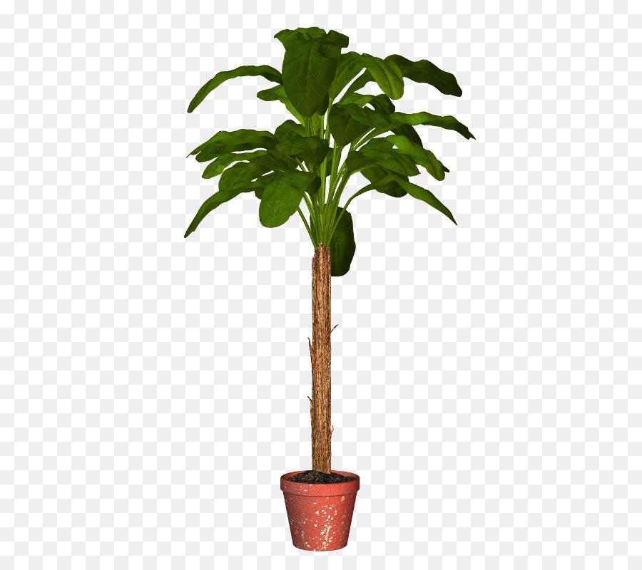 Palmen, Blumentopf, Zimmerpflanze Pflanzen - png ...