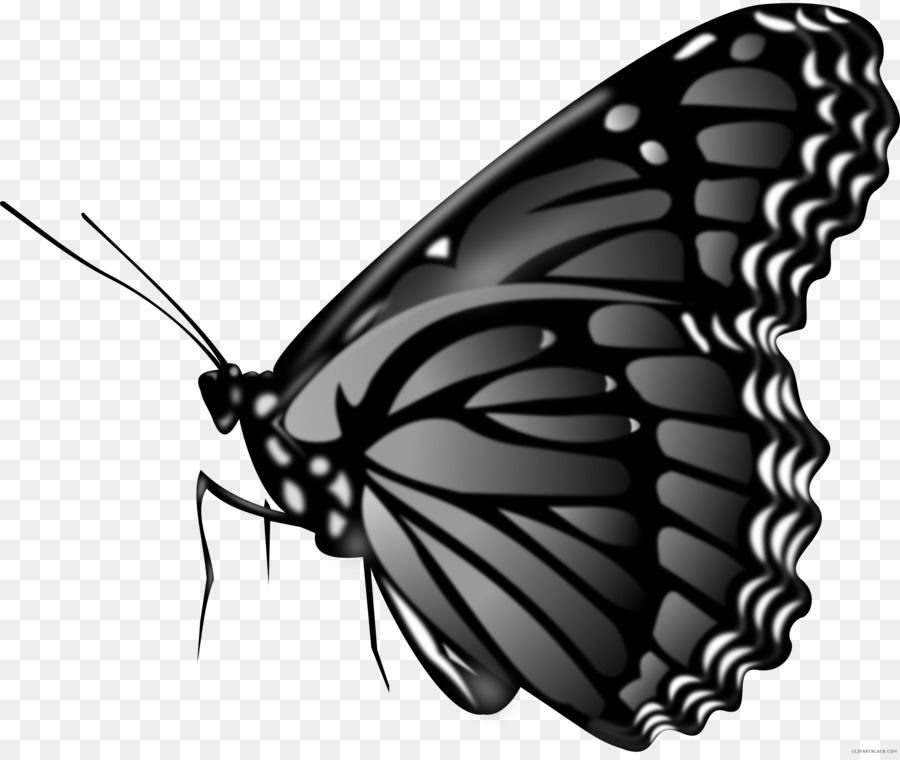 Free Butterfly Images Black And White, Download Free Clip Art, Free Clip Art  on Clipart Library