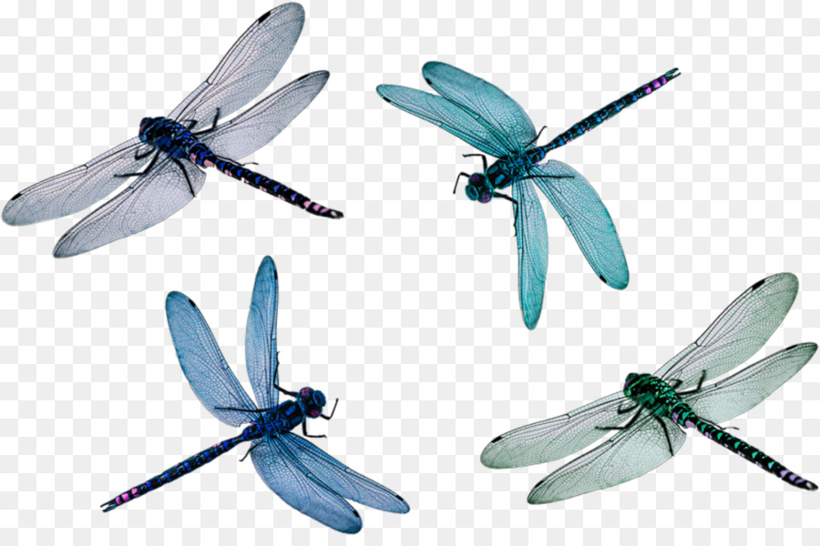 Wings Png Download 1515 992 Free Transparent Dragonfly