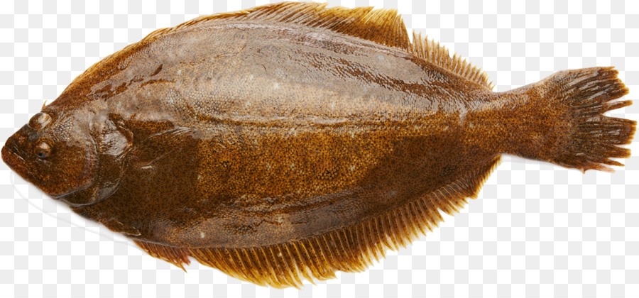 Fishing Cartoon Png Download 1000 456 Free Transparent Flounder Png Download Cleanpng Kisspng ··· olive flounder in the jeju island farms. fishing cartoon png download 1000 456