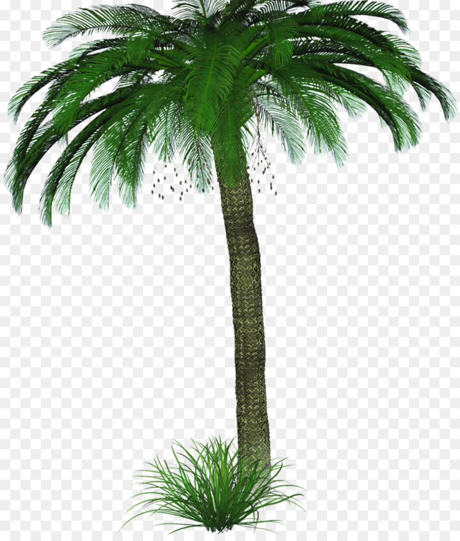 Coconut Tree Cartoon Png Download 928 1080 Free Transparent Asian Palmyra Palm Png Download Cleanpng Kisspng Share the best gifs now >>>. coconut tree cartoon png download 928