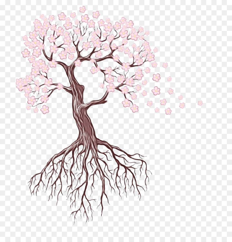 Oak Tree Drawing Png 975 1000 Free Transparent
